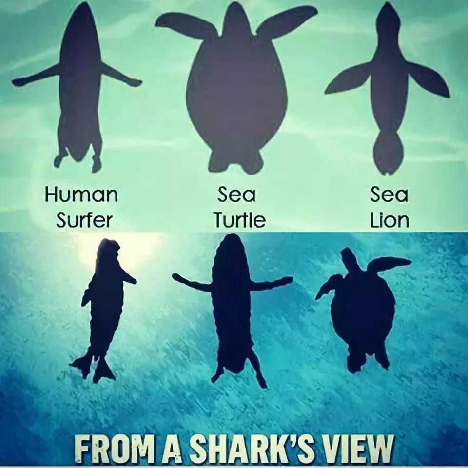 食人鲨鱼真的存在吗 3分钟揭秘大白鲨 吃人 现象背后的原因