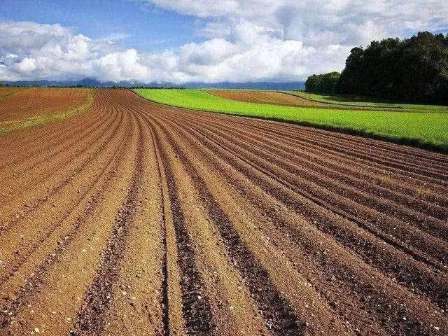 种地壁纸_农业补贴这么多,农民为什么不愿意种地?老农4句话打脸