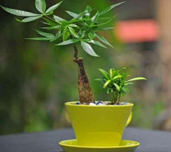 心理学:4棵发财树选一棵,测试你最近有没有喜