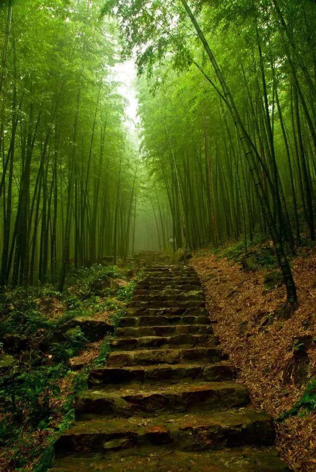 當你走進山上的小道里,周圍被竹林包圍著,空氣里彌漫著霧氣,涼颼颼的