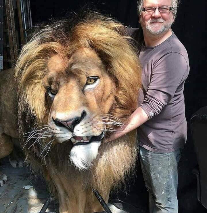 狮子王真人版道具造型太逼真,网友:活生生的狮子标本