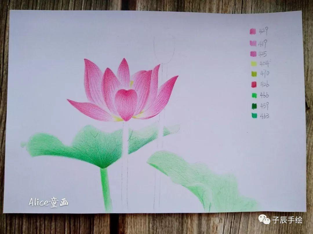 荷叶手绘彩铅画