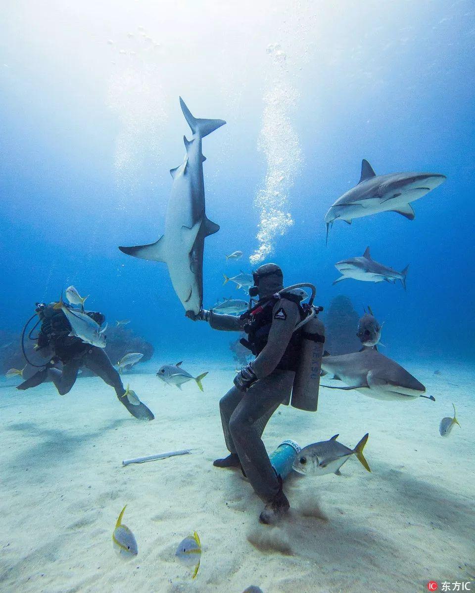 可撩妹闪婚,也可喂鲨遛猪,这个免签海岛火了!