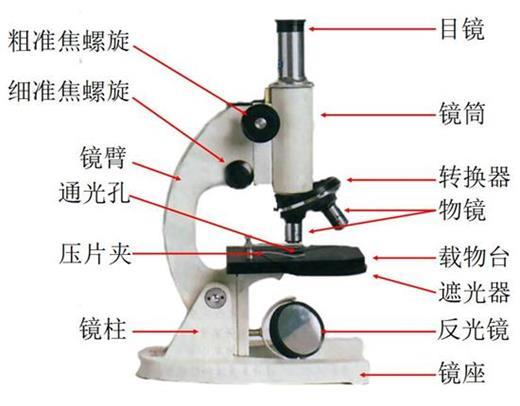 显微镜的结构图