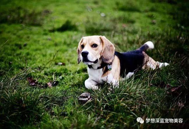 狗狗患上皮肤病不能吃哪些食物?