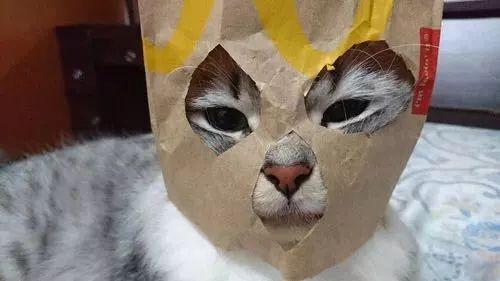 埃及艳猫,是你吗?