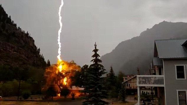 粉身碎骨!美居民院内小树被巨型闪电击中