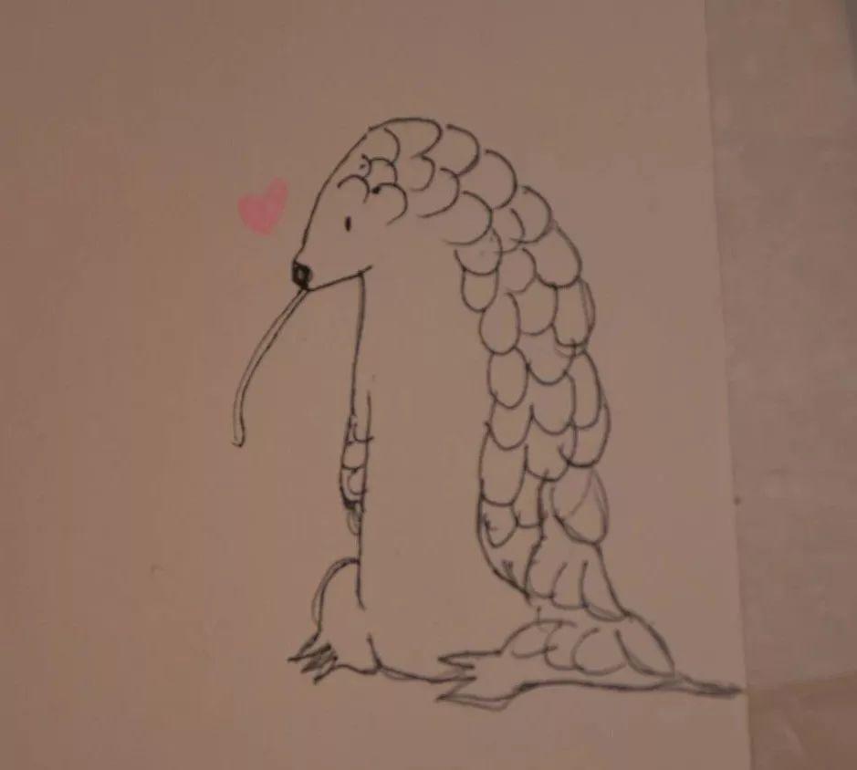 有的同学发挥起美术特长,画出小小穿山甲图片