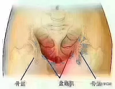 【徒手盆骨修复靠谱吗】徒手盆骨修复有副作用吗?