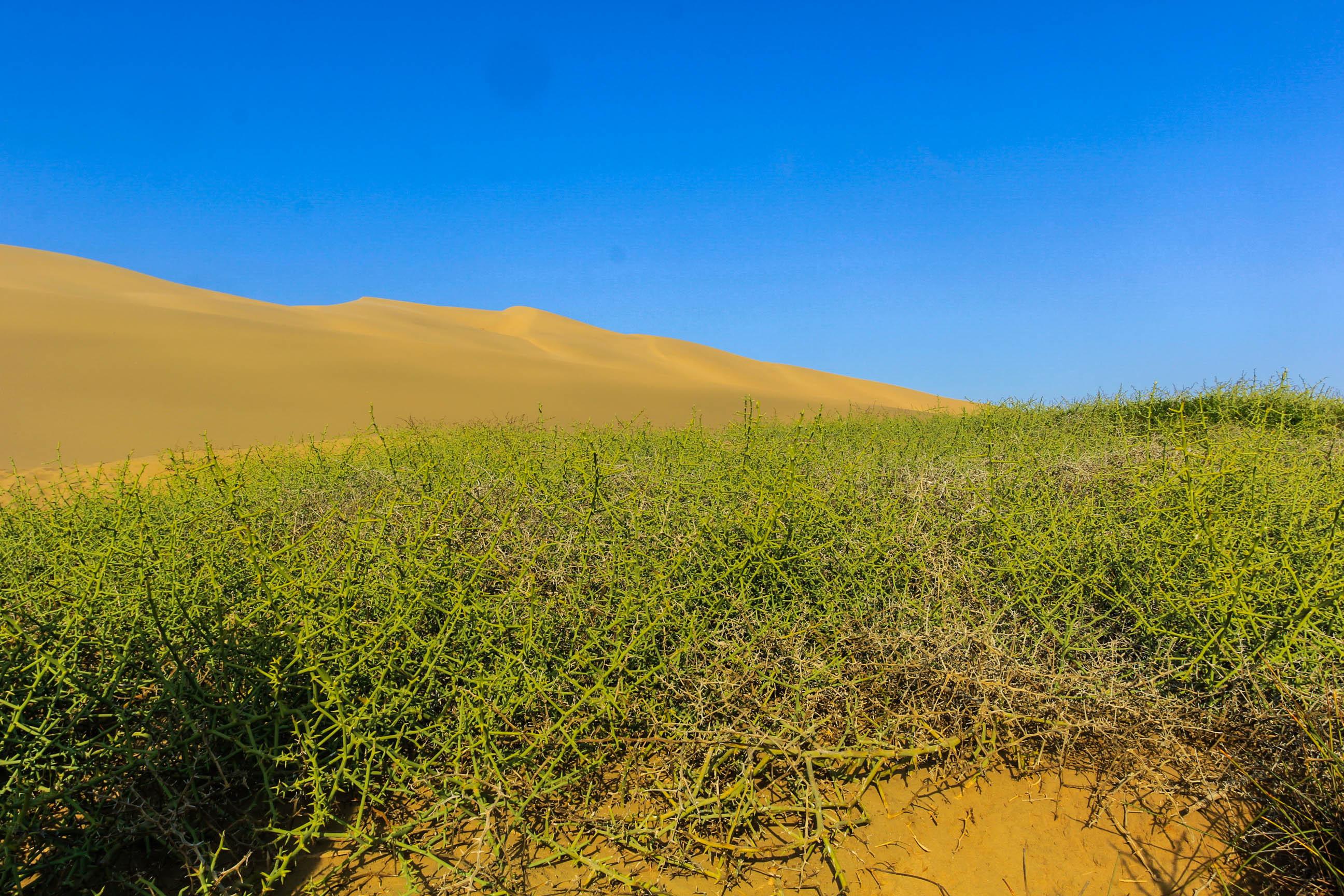 非洲这个沙漠生活着羚羊、鸵鸟等野生动物,还能踩出水来