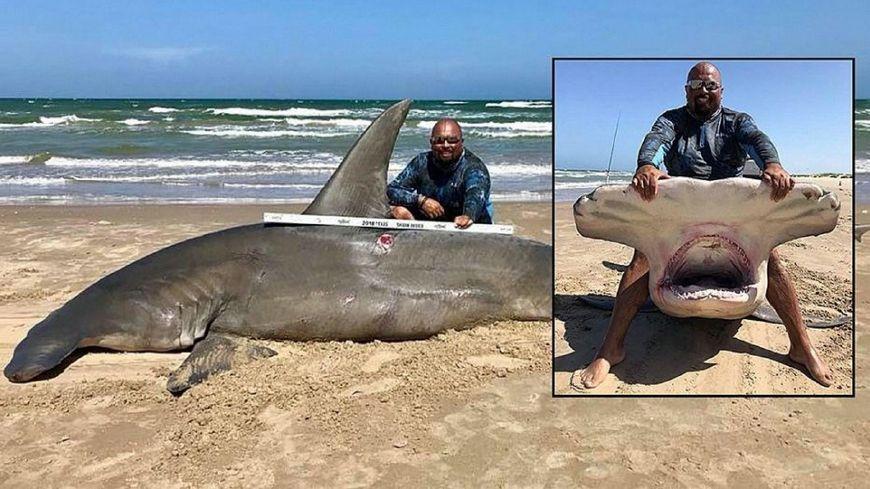 德克萨斯州渔民钓上来4米多长鲨鱼很兴奋,结果却让人悲伤