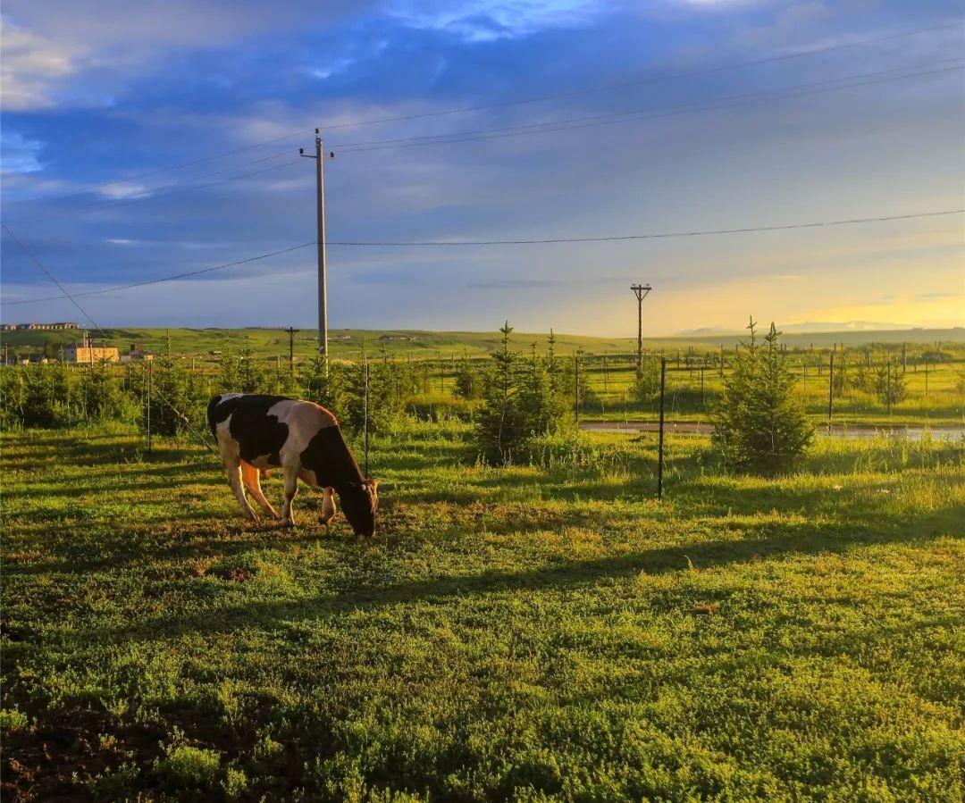 中国最美的8大草原,7月进入最美时刻,选一个出