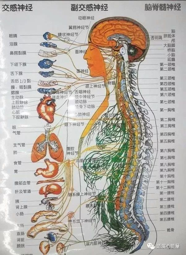人体�9/�_脊柱的结构 脊柱——我们的力量源泉,我们人体的最大,最厚,最长,最有