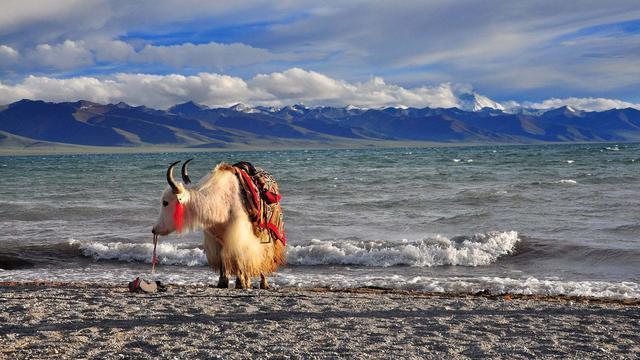 川藏线拼车和川藏线包车区别是? 川藏线旅游攻略 第2张