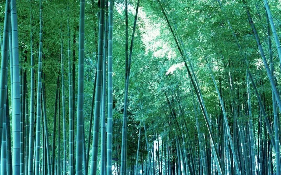 夏天,在竹林听一耳青青色.