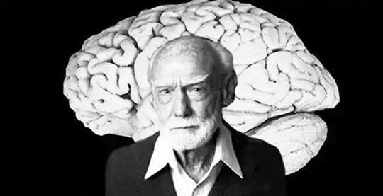 全脑教育优的堡,孩子学习烦恼少