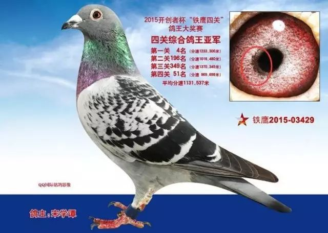 意思鸽动物蝴蝶图示鸟教学640_456鸟类吸鸽子的器官是什么花粉图片