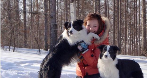 養邊境牧羊犬,都會經歷這5個痛苦,怪不得養的人這麽少!