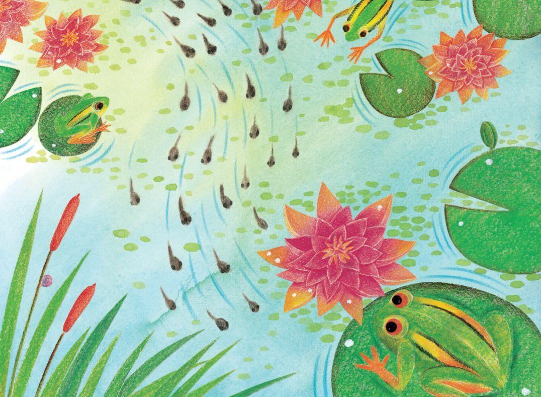 爱读书 爱生活 绘本时光 小蝌蚪是怎样变成青蛙的图片