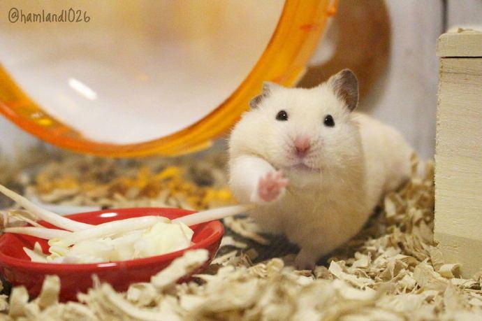 大阪的小倉鼠,在美食面前,已經完全放棄表情管理