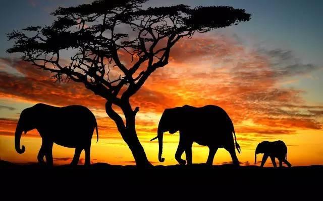 南非克鲁格国家公园+迪拜12日(五星阿联酋航空,2晚国际五星,迪拜一整天自由活动)