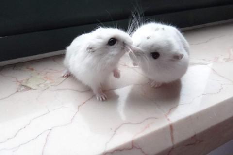 认识一下实验室的萌萌小白鼠