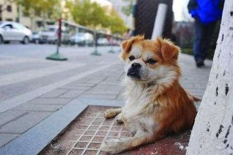 狗狗快死之前,它们都会躲角落里孤独的等待死亡,这是为什么?