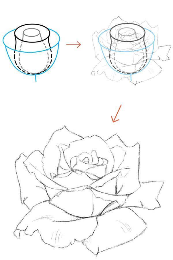 文化 正文  月季花花蕾的花瓣较少,看起来就像一个高脚杯.