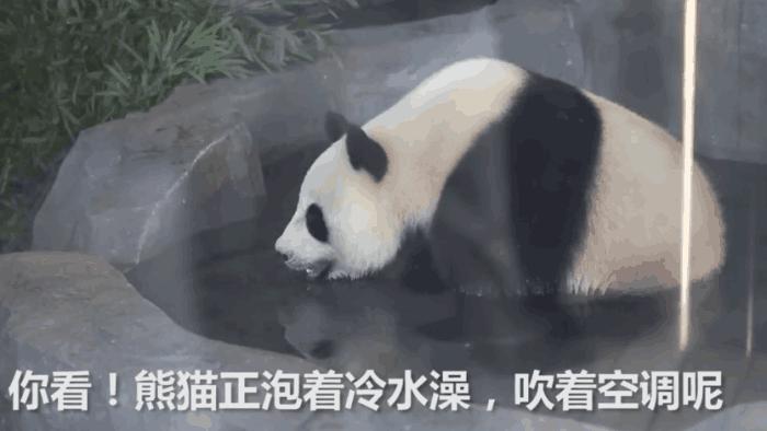 吹空调、吃雪糕、没事还能泡个澡, 动物园给动物降温待遇比公司都好