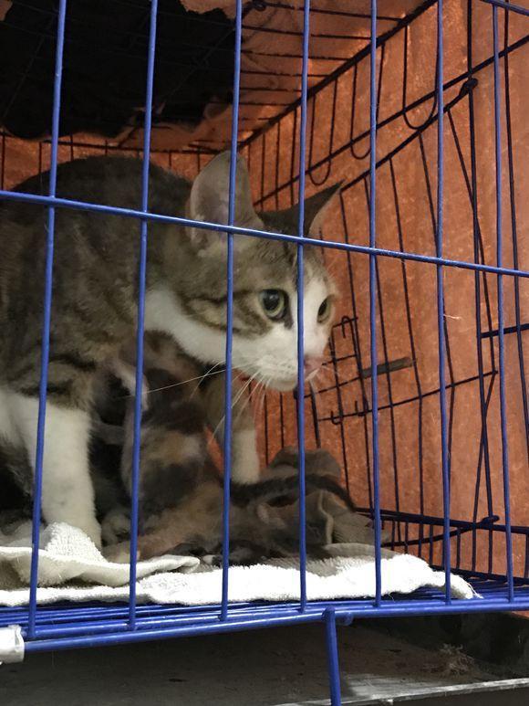 遛狗時在樓下撿了兩只小奶貓,撿回家後沒多久貓媽媽也被抱回家了