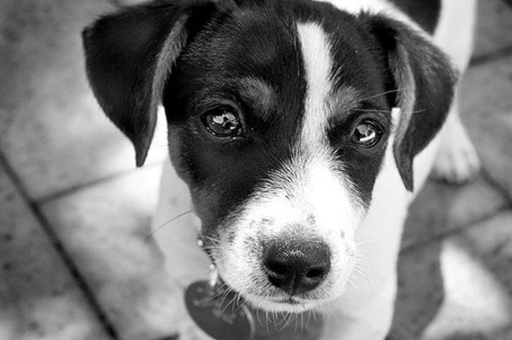 为什么总说狗狗死后不能埋?真相竟然是这个!