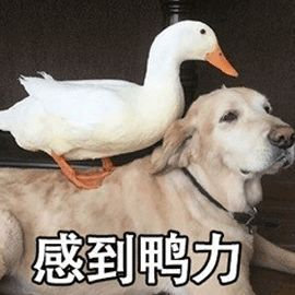"""你的""""狗缘""""好吗?受狗狗欢迎的人都有这样的特征……"""