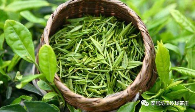[原创]绿茶的分类(图)