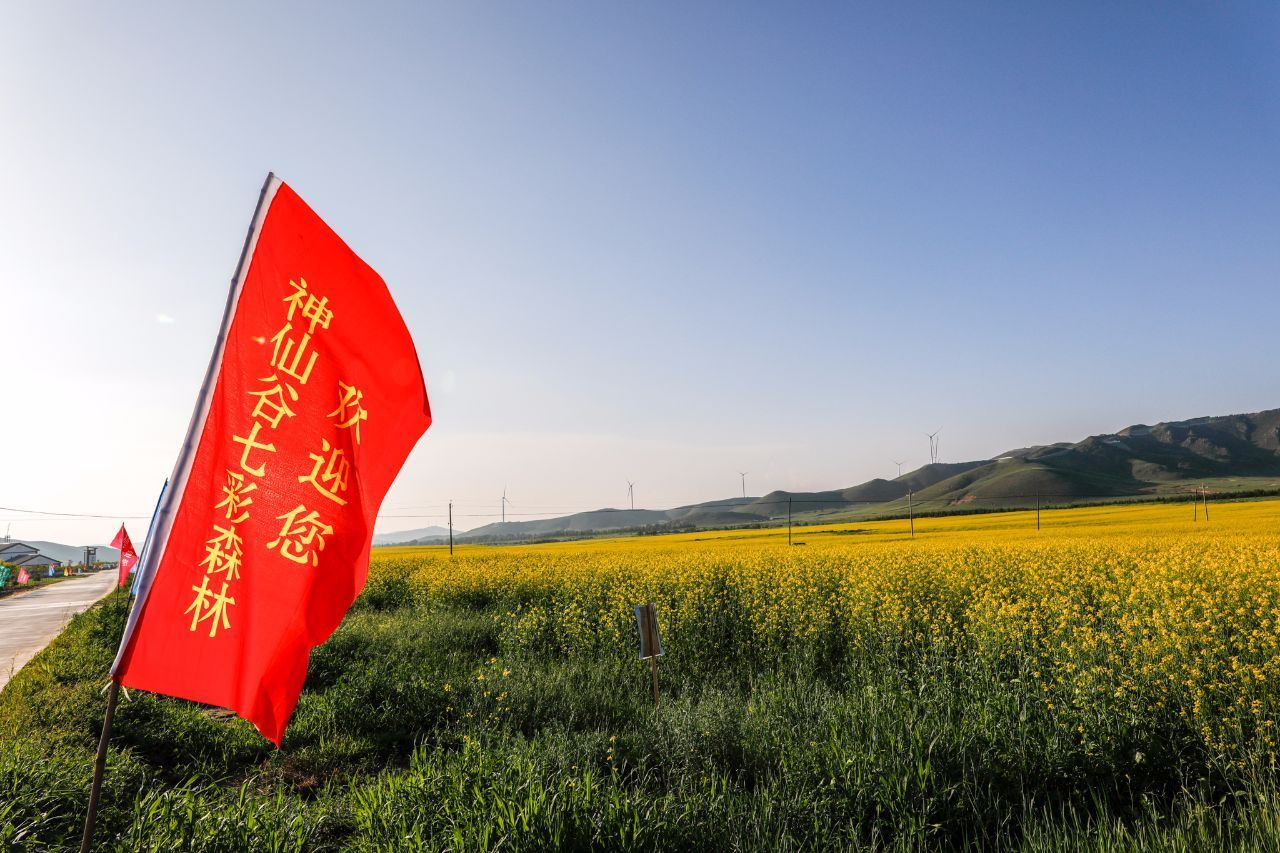 酷暑七月,消夏纳凉、看油菜花海,神仙谷七彩森林里做回神仙!