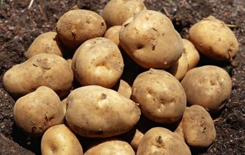 [原创]咖喱土豆怎么做 这些做法你要知道(图)