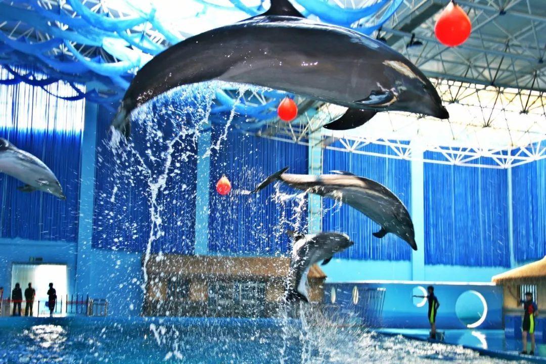 【关注】永泰欧乐堡海洋世界开业在即 海洋极地动物陆续入驻图片