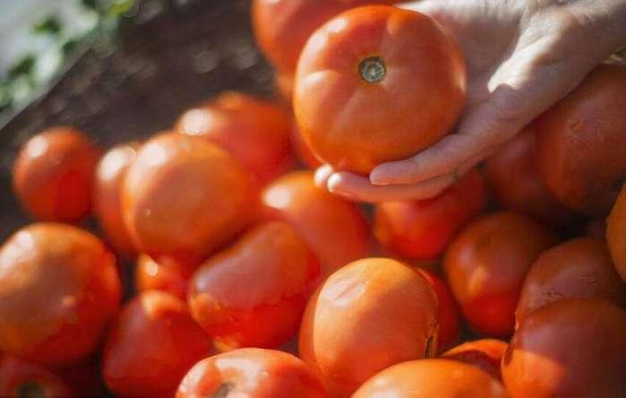 [原创]这五种蔬菜最易买到毒菜!最后一种是毒中之毒,但很多人都爱!(图)