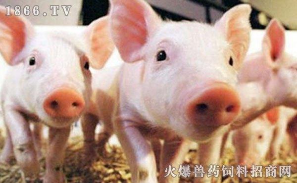 """[原创]一个被家庭猪场忽视的""""宝藏""""你可知晓?(图)"""