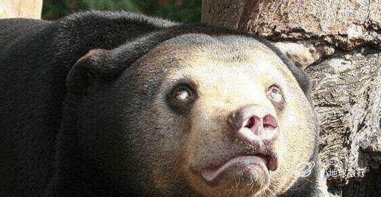 世界上最不可愛的熊