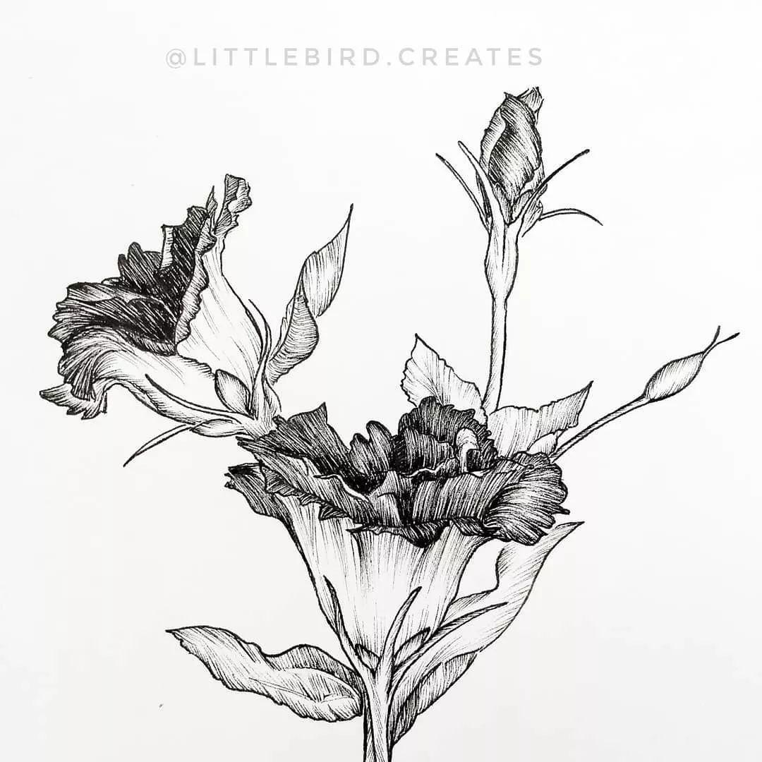 用针管笔画花卉,小白也可以秒变大神