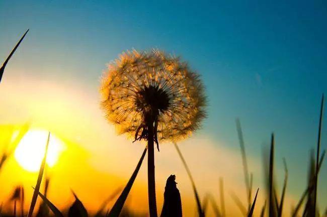 心有阳光唯美句子