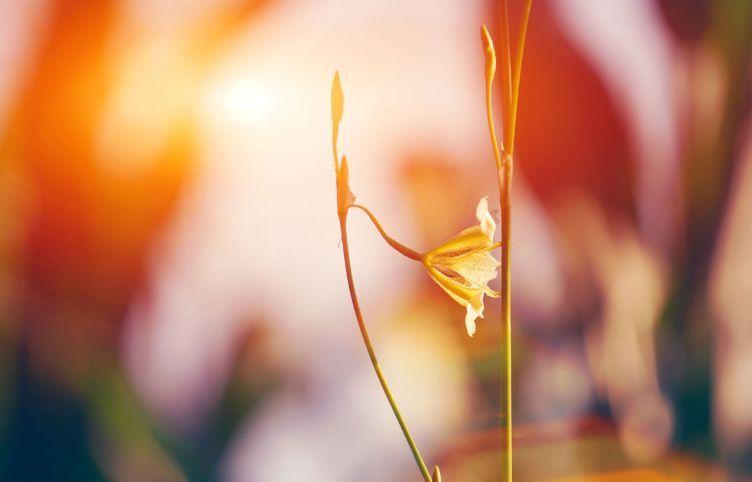 小提琴独奏《我爱你中国》优美抒情,超赞!