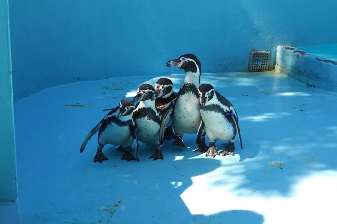 暑假就去SAMJUNG The Park动物园吧
