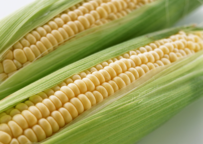 每天吃玉米的理由