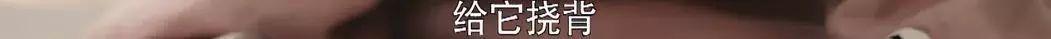 昔日丫鬟路人甲,如今秦岚宁静阿娇都给她做配角!资源突然开挂了? 作者: 来源:糊说娱有料