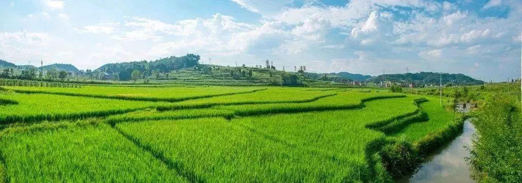 龙亭稻田3D景观就是农人在田野间细细密密的指纹啊!