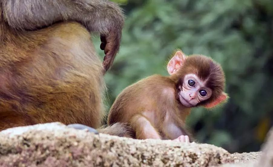 游客可上岛购买食物喂猴子 注意与猴子保持距离 避免猴子挣抢食物碰伤