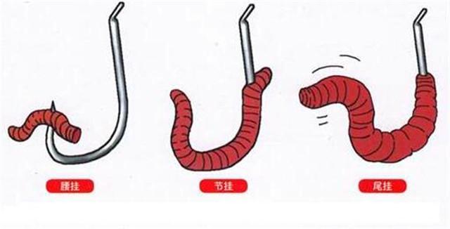 蚯蚓的挂法_蚯蚓的挂法也有很多,大家可以参考几种挂法.