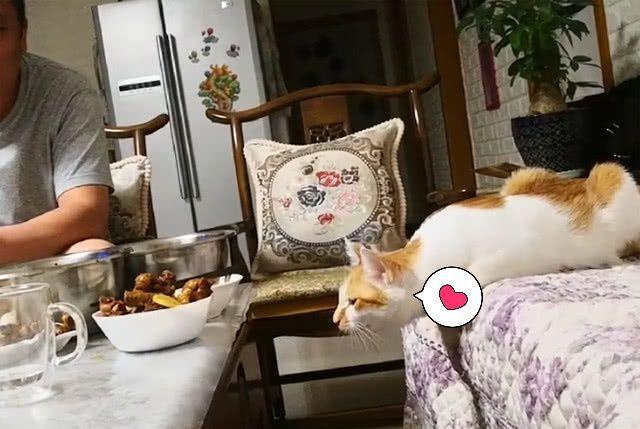 真貓奴!主人看見橘貓上餐桌偷吃,卻不阻止,全程露出寵溺笑容