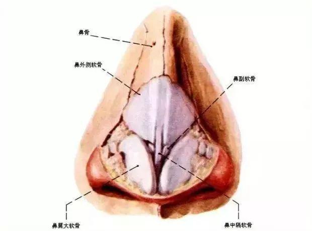 鼻整形专栏 | 鼻整形常用材料及其优缺点